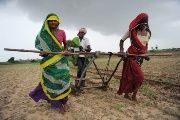 Indian farmers plow a field in preparation for sowing cotton in Nani Kisol village, around 70 km from Ahmedabad.