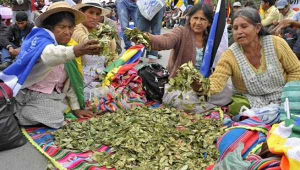 Bolivia celebrates the national day of coca leaf chewing.