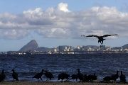 Brazil's ruling party has heaved 36 million Brazilians out of poverty since 2002. Photo shows a vulture over Guanabara Bay, in front of Sugar Loaf mountain.