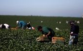 More than 80,000 workers work in semi-slave conditions in the fields of San Quintin.