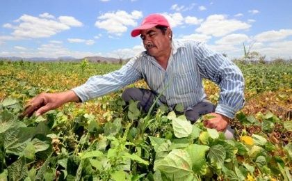 A farmer tends to his bean crop in Honduras. Rural areas are hardest hit by poverty in hunger in the country where 70 percent of the population lives in multi-dimensional poverty.