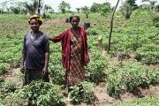 Members of Abrono Organic Farming Project (ABOFAP) in their organic chilli farm near Techiman, Ghana, April 29, 2015.