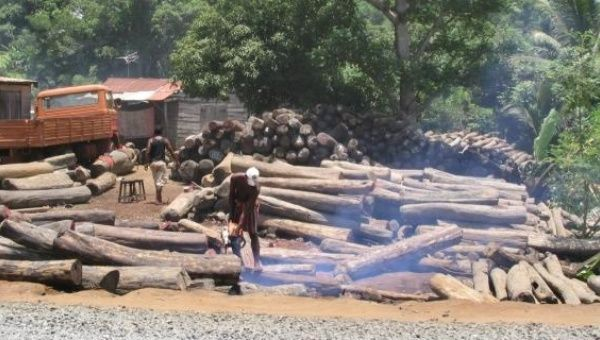 Illegal logging has been a serious problem in Peru