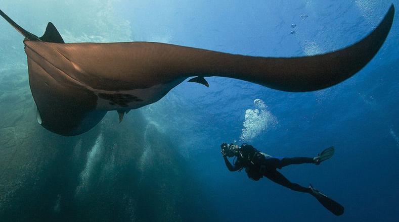 De los océanos se obtienen toneladas de pescado cada año, sal y agua dulce. Además, el desarrollo de reservas petroleras y de gas natural en ellos abastece gran parte de la demanda mundial de hidrocarburos combustibles.
