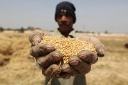 Small farmers hold the key to tackling hunger, according to the FAO.