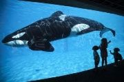 Young children get a close-up view of an Orca killer whale during a visit to the animal theme park SeaWorld in San Diego, California March 19, 2014.