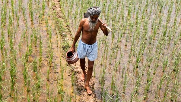 Monsanto seeds are said to be responsible for the spike in suicides of India farmers.