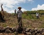 Honduran farmers wait for food aid during last year's drought.