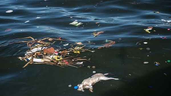 A dead cat floats amid debris at the Guanabara Bay.