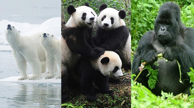 15 Animales En Peligro De Extinción Multimedia Telesur