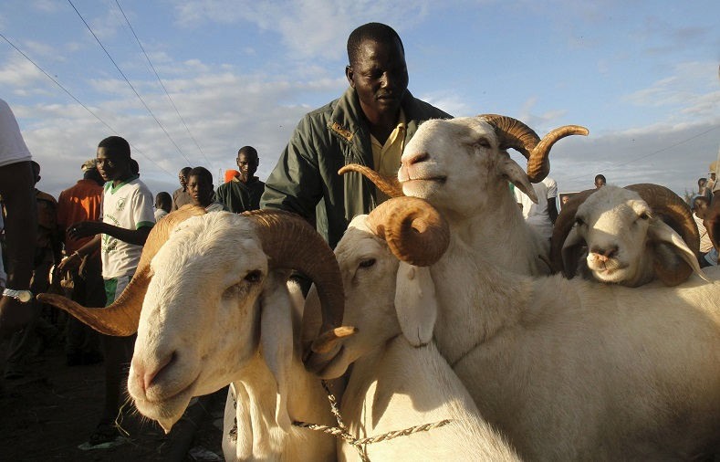 A man gathers his sheep at a sheep market two days ahead of Eid al-Adha, in Port Bouet, Abidjan, Ivory Coast.