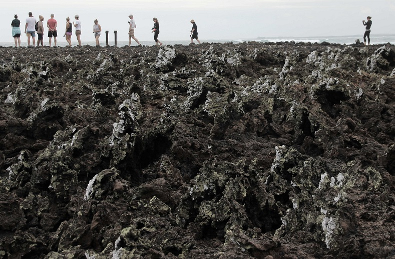 The jagged volcanic rocks of the island of Las Tintoreras make for the perfect environment for marine iguanas to thrive.