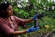 Environmental activist Cyntia Zapata shows a plastic bottle with oil waste from a pool of waste Chevron left behind in the Amazon, Sep. 17, 2013.