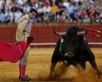 The European Union currently gives over US$160 million a year to the bullfighting industry.