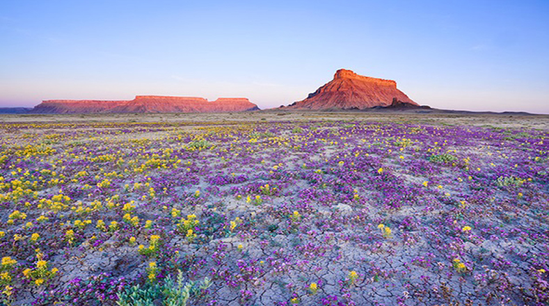 The region has experienced a 40 percent rise in tourist numbers as visitors flock to see the flowering desert.