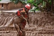 A fireman rescues a dog that was trapped in the mud that swept through the village of Bento Rodrigues in Brazil.