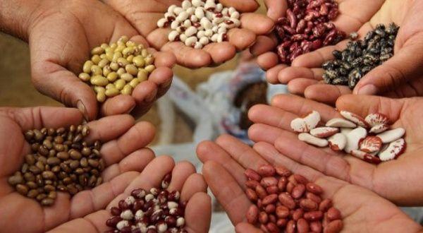 Resultado de imagen para semillas del pueblo, venezuela