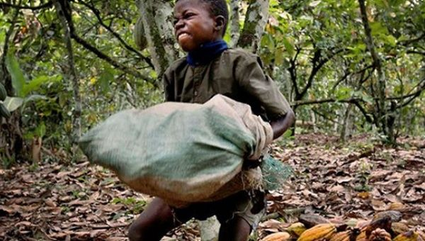 Nestle Buys Cocoa from Farmers They Know Buy Children for $30 ...