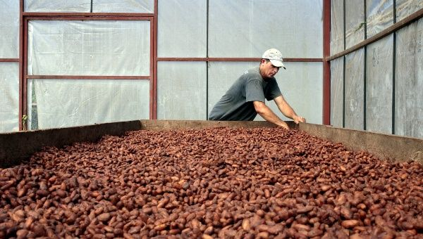 "A worker dries cocoa beans at the ""Jorge Salazar"" Cooperative in the town El Tule in Matagalpa, Nicaragua January 8, 2016."