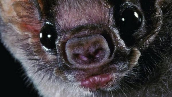 Indigenous children have died after being bitten by rabid vampire bats.