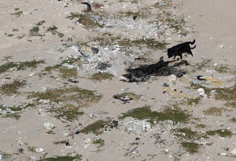 A dog approaches the burnt body of a person at a crime scene in a low-income neighborhood in Ciudad Juarez November 9, 2014. According to local media, the body was identified as the body of a woman.