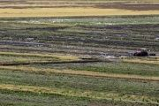 A farmer in a rice field in Taubate, Brazil, June 19, 2015.