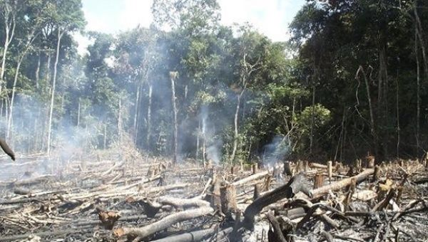 the effects of illegal logging essay The effects of illegal logging – illegal logging negatively impacts the economic and  the mission of orangutan foundation international is to support the .