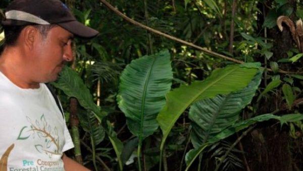 Guatemala: Önde Gelen Çevre Hareketi Eylemcisi Katledildi