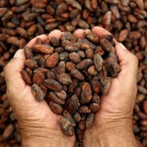 el cacao latino personals A pesar de que honduras no aparece en las lista de los grandes productores de cacao, la calidad de sus procesos y el manejo de la planta ya le ha traído el reconocimiento internacional por su .