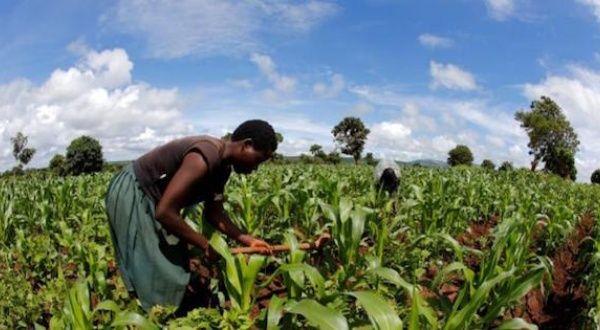 Bill Gates Supports Destructive Corporate Africa Agenda