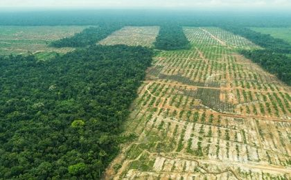 Deforestation of the Peruvian Amazon Rainforest