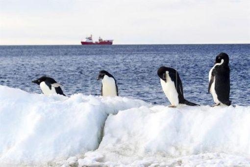 Mar de Ross, en Antártida, será mayor reserva marina del mundo