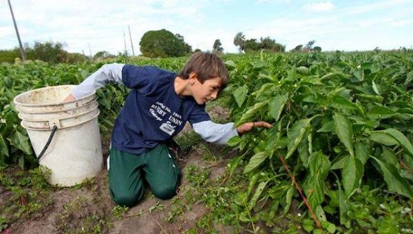 Image result for north carolina tobacco farms