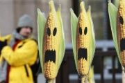 A Greenpeace activist displays signs symbolizing genetically modified crops at a protest in front of the European Union headquarters in Brussels Nov. 24, 2008.