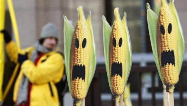 """Germany has committed a true act of food democracy by listening to the majority of its citizens that oppose GMO cultivation,"" Lisa Archer said."