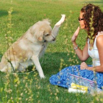 La memoria episódica en los perros asocia recuerdos temporales.