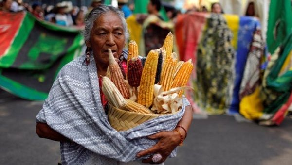 A demonstrator carries a basket with corn cobs during a protest march against Monsanto in Mexico City, May 21, 2016.