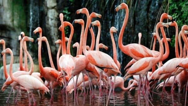 Flamingos in a German zoo.