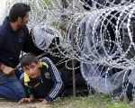 Syrian asylum-seekers climb under rolls of razor wire into Hungary at the border with Serbia.