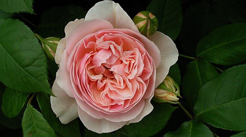 Seis Flores Raras Que Te Sorprenderan Multimedia Telesur