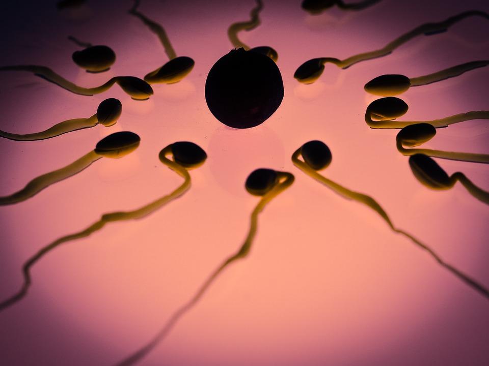 Aprueban primera licencia para bebés con ADN de tres padres
