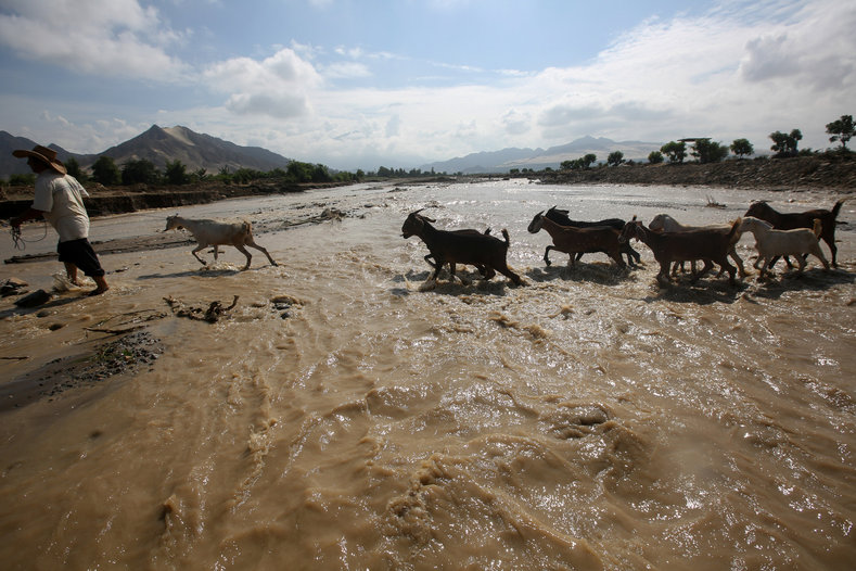Goats cross the Viru river after a massive landslide and flood in Trujillo, northern Peru, March 22, 2017.