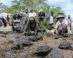 People release of a group of captive-reared juvenile giant tortoises in Santa Fe Island, part of Ecuador's Galapagos Islands.