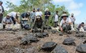 People release of a group of captive-reared juvenile giant tortoises in Santa Fe Island, part of Ecuador
