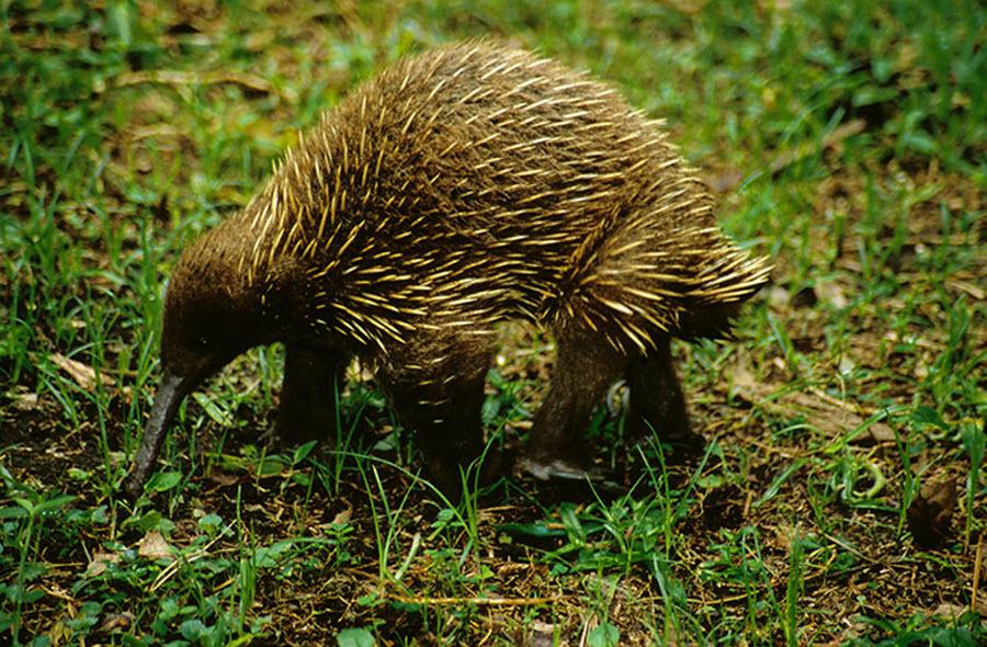 Campaña para encontrar los 25 animales más buscados del planeta