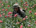 A soldier walks among poppy plants before a poppy field is destroyed during a military operation in the municipality of Coyuca de Catalan, Mexico April 18.