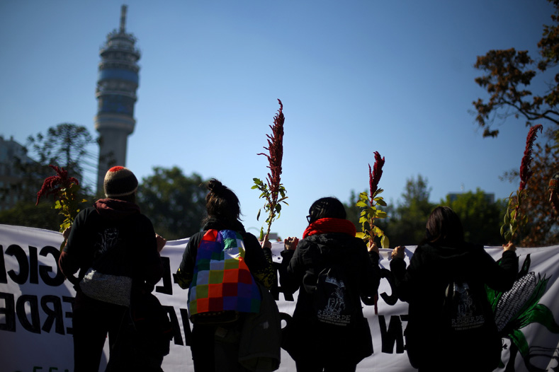 Demonstrators hold Quinoa plants during a protest against seeds company Monsanto in Santiago, Chile, May 20, 2017.