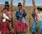 Indigenous farmers in Bolivia