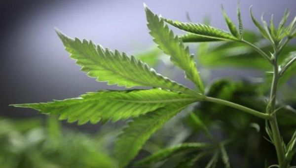 The legislation to legalize medical marijuana received a 347-7 vote in favor of its approval.