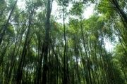 India plans to reforest 12 percent of its lands.